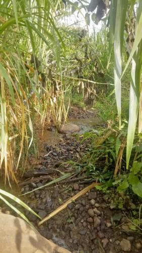 Kades Mekar Sari Harapkan Bantuan Pembanguan Sumber Air Bersih dari Pemkab Oku Selatan